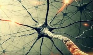 Влияние кофеина на нейроны